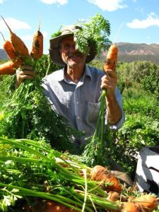 Greg Shows off His Organic Carrots